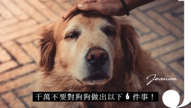 Photo of 千萬不要對狗狗做這 6 件事!你以為對牠好,其實牠一點也不開心